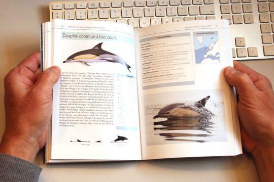 Observer les baleines