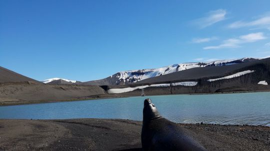 Découverte de l'Antarctique