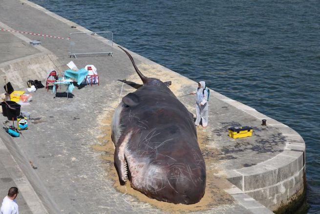 Une baleine échouée sur les quais de Seine