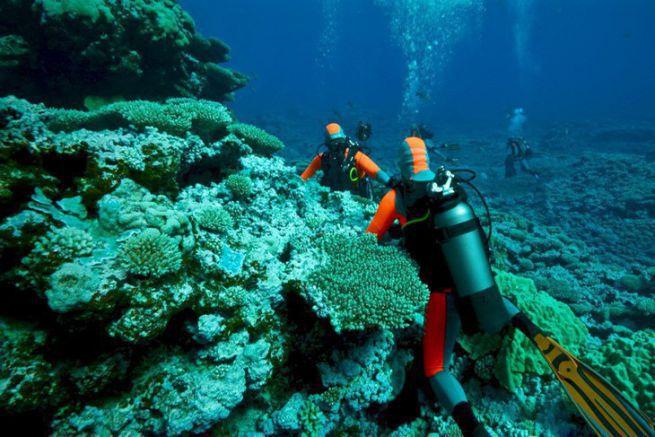 Etude des coraux
