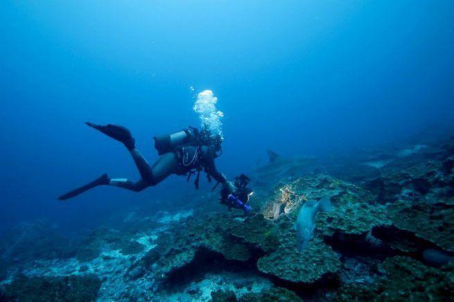 David Hannan, directeur de la photographie sous-marine