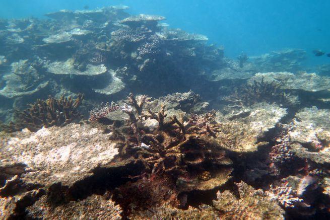 Dégradation des récifs coralliens dans les îles Samoa