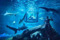 Chambre éphémère Aquarium de Paris