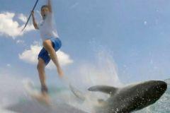 Maximo Trinidad rencontre un requin