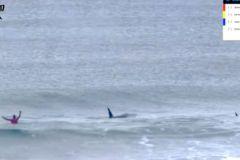 Des orques s'invitent en pleine compétition de surf