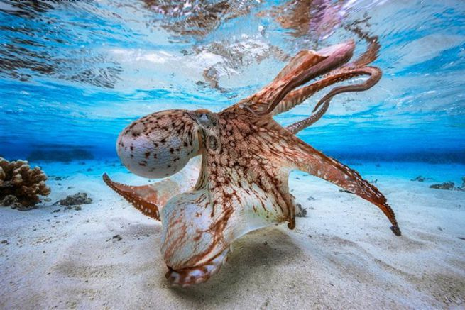 Dancing Octopus par Gabriel Barathieu